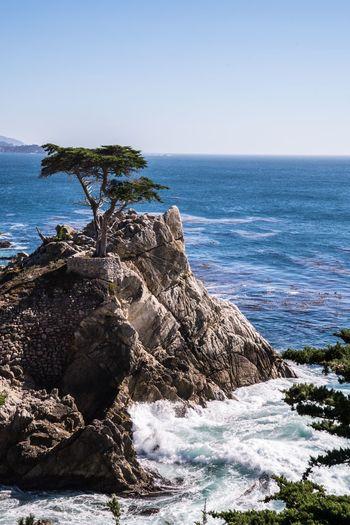Lone Cypress California Love California Tree Monterey Pacific Coast Highway Pacific Ocean TreePorn Wave