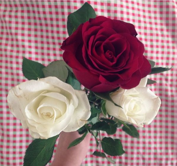 Popular Photos Afterexam Collegelife Happy Girl Beautiful Roses Nature Flowers