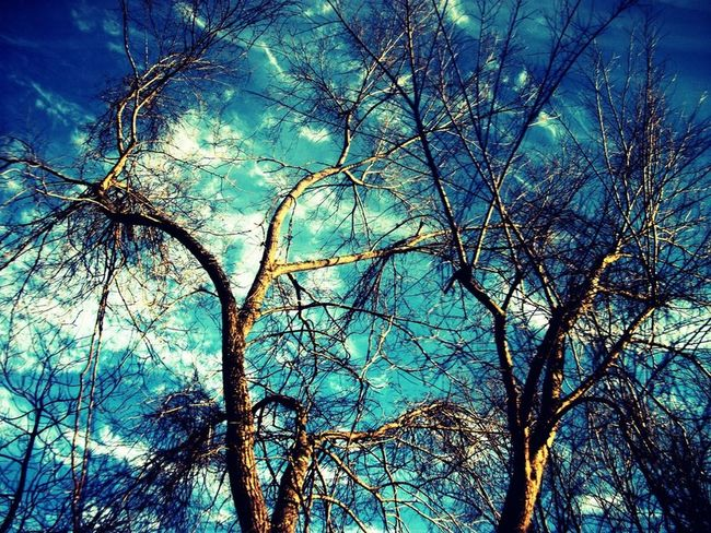 Brisk Barren Trees Blue Sky