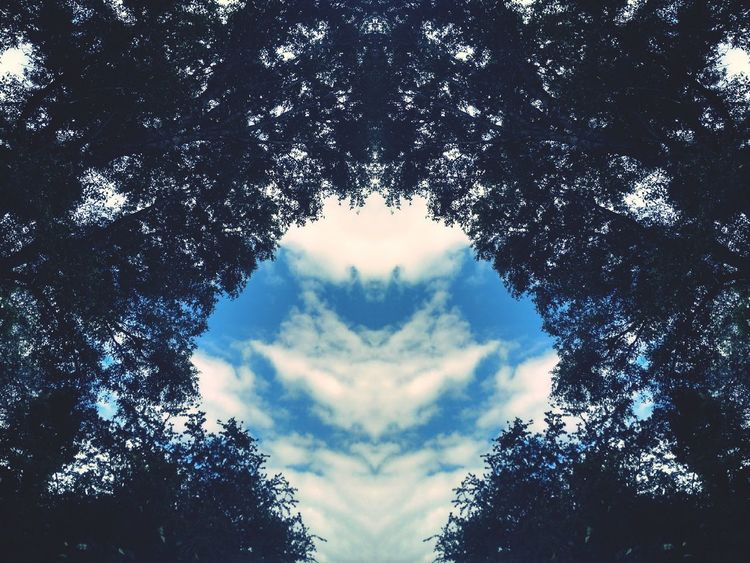 Tree Cloud - Sky Outdoors Sky Day No People Beauty In Nature Trees And Sky Trees Mirror Fliter Mirror Effect Mirroreffect Mirrorshot EyeEmNewHere Symmetry Beauty In Nature Sky And Clouds Clouds And Sky Clouds Eyeem Market Nature