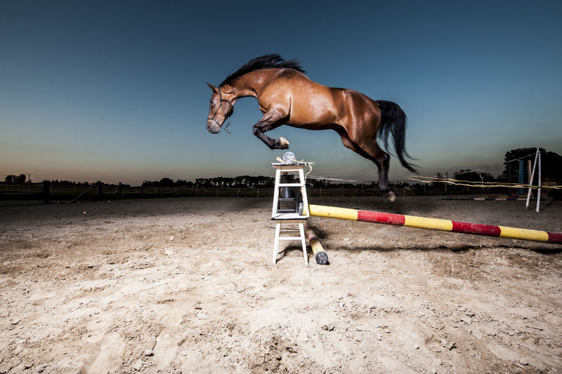 Side view of horse jumping over hurdle against blue sky