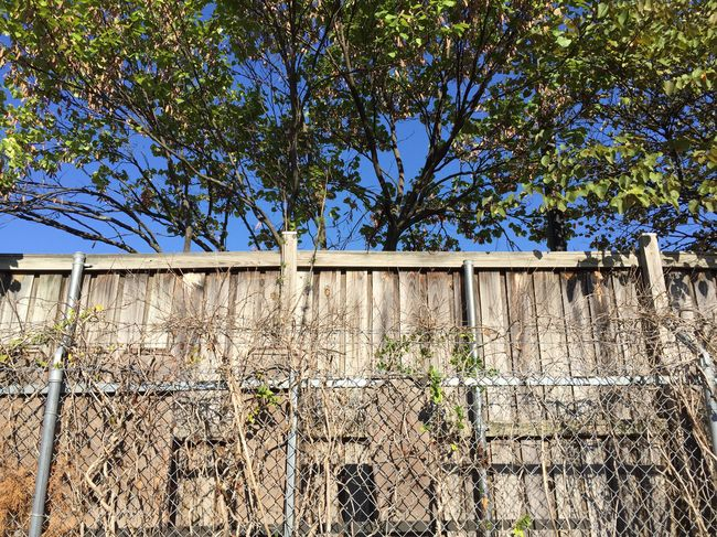 2015 | Photo: Michael F. Pichette Wall - Building Feature Tree Fence Low Angle View Virginia