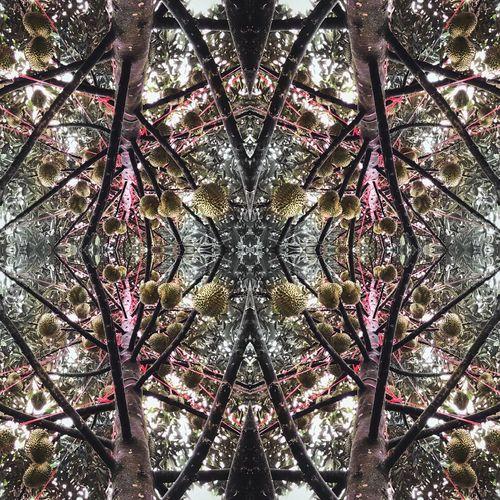 Durian mosaic