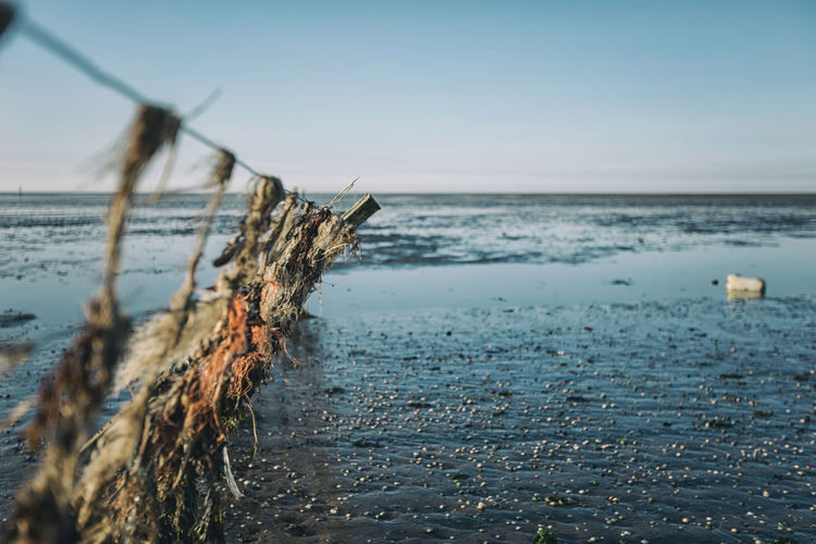 Close-up of driftwood on beach against sky