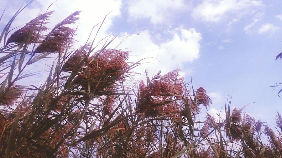 Outdoors Freshness Under Blue Skies