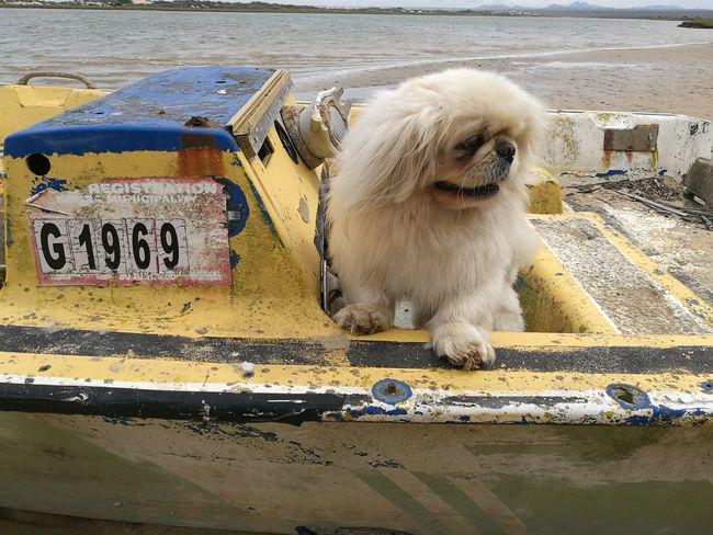 Ahoiiii Captain ... Animal Themes Outdoors Pets One Animal First Eyeem Photo