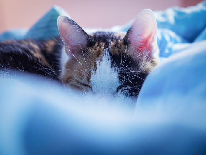 Sleepin' cat Animal Themes Bed Bedroom Cat Close-up Cover Day Domestic Animals Domestic Cat Feline Indoors  Mammal No People Pets Pillow First Eyeem Photo EyeEmNewHere The Secret Spaces