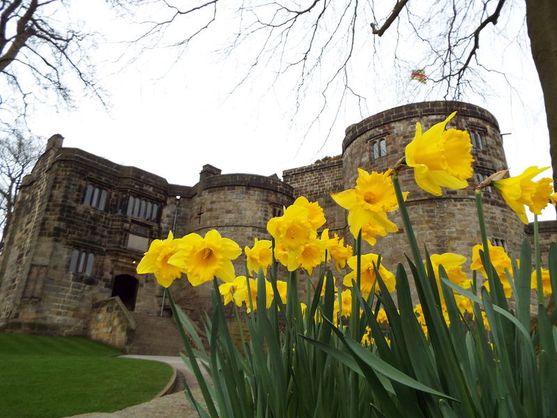 Daffodils infront of the main entrance to the castle building Daffodils Main Entrance Castle Entrance Skipton Castle Castle Entrance Medieval Castle Medieval Flowers Yellow Yellow Flowers