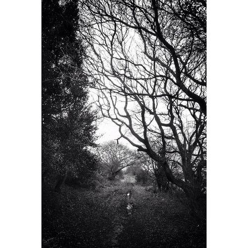 Trees TreePorn Trunkilicious Rsa_dark rsa_naturersa_nature_bnwnexus_bnwcapturingbritain_bnwfiftyshades_of_darknessgloomgrabberbwbnwigbwtgif_bnwicu_britain_bwbnw_natureprincely_bwbnw_calabria