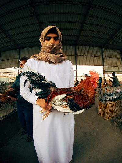 ٍRooster The