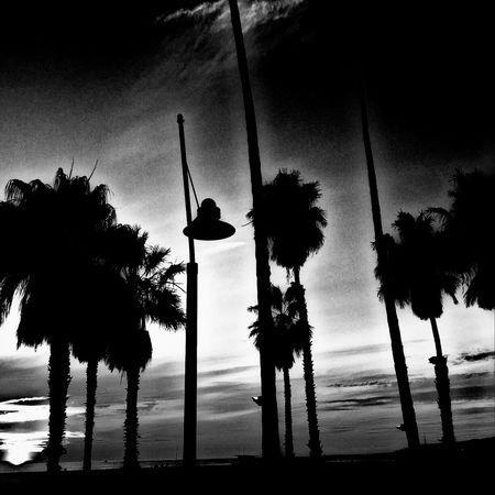 Palm Trees EyeEm Beach Photography Sunset Sunset Silhouettes Streetphotography Taking Photos Venicelife Eyeem Beach Shots Blackandwhite