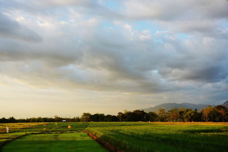 Field Plant Cloud - Sky Landscape Sky Beauty In Nature Agriculture Rural Scene Field Tranquility Land Tranquil Scene Environment Scenics - Nature Tree Growth Farm Nature No People Crop  Green Color