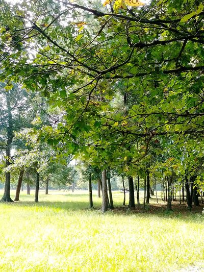 Tree Growth Field Nature Green Color Beauty In Nature Grass Day Outdoors Landscape No People Scenics Branch