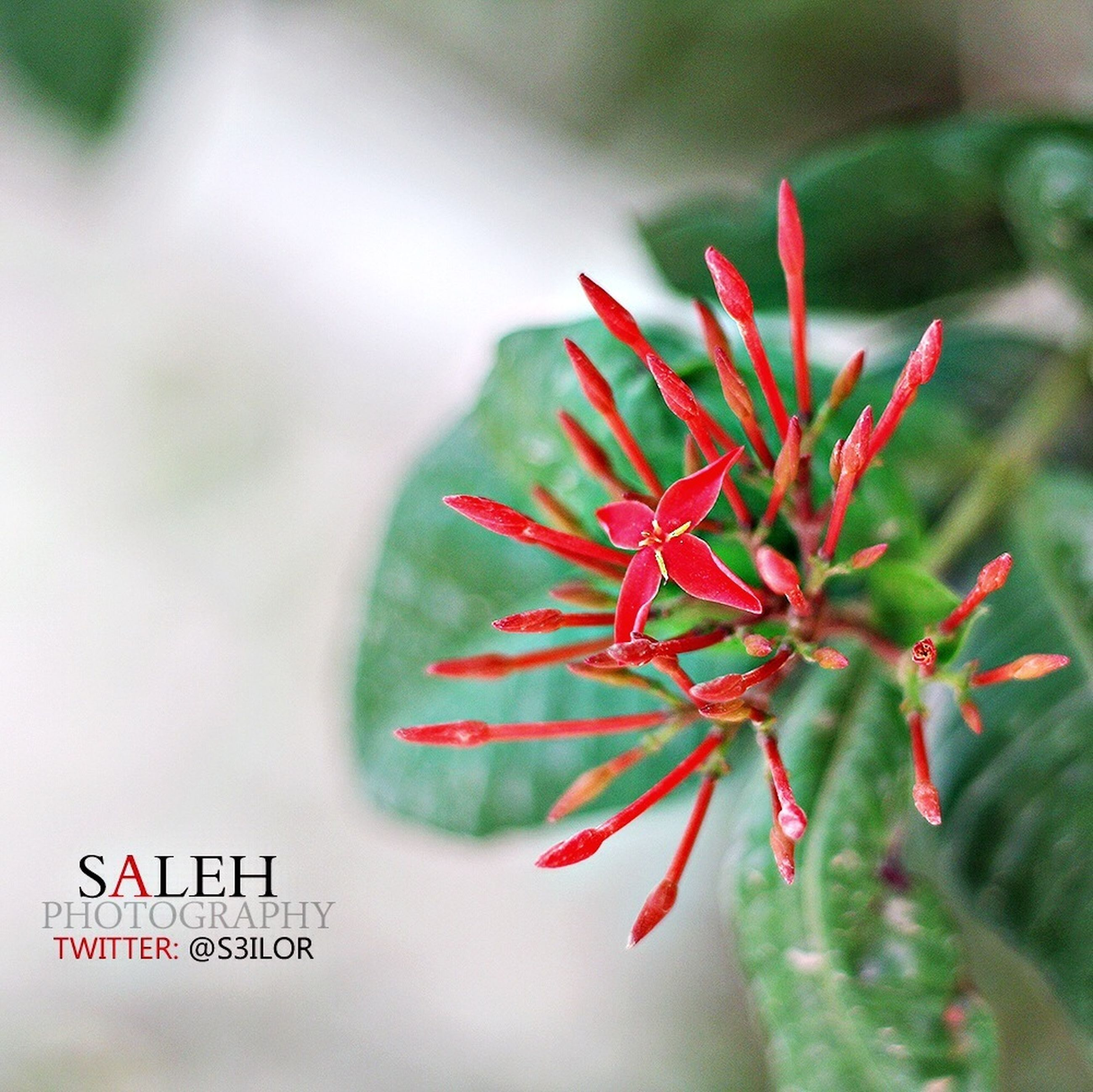 red, focus on foreground, close-up, selective focus, freshness, flower, growth, nature, plant, day, beauty in nature, leaf, no people, outdoors, pink color, fragility, text, stem, part of, detail