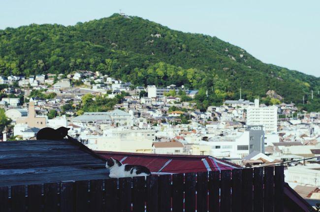 May 8, Hiroshima Cat Pentax Traveling