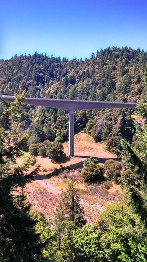 Mountain Tall Bridge Mountain View Redwood Tree Bridge Man-made Structure Dangerous Structure