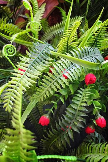 Artificial leaves and flowers Leaf Green Color Plant Nature Beauty In Nature Close-up Day Outdoors Fern No People Freshness Fragility Branch