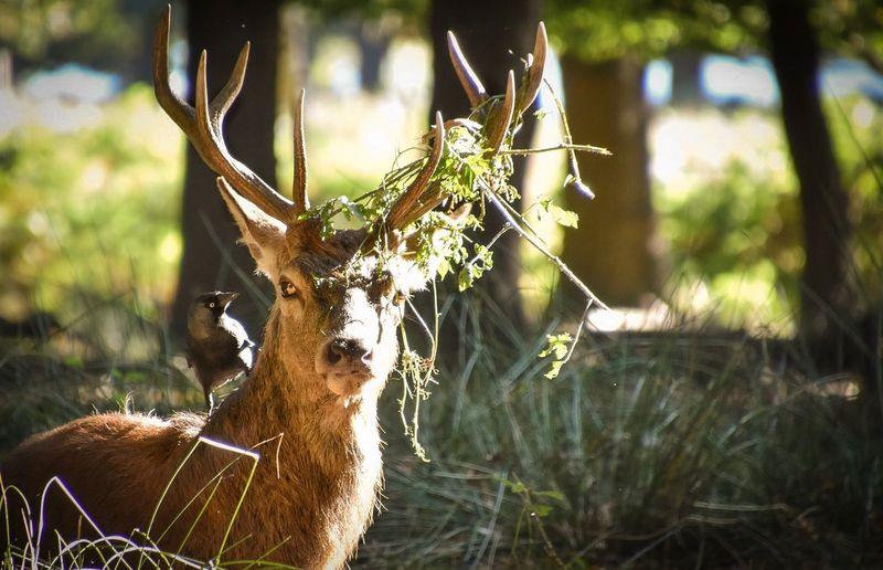 Deer on tree