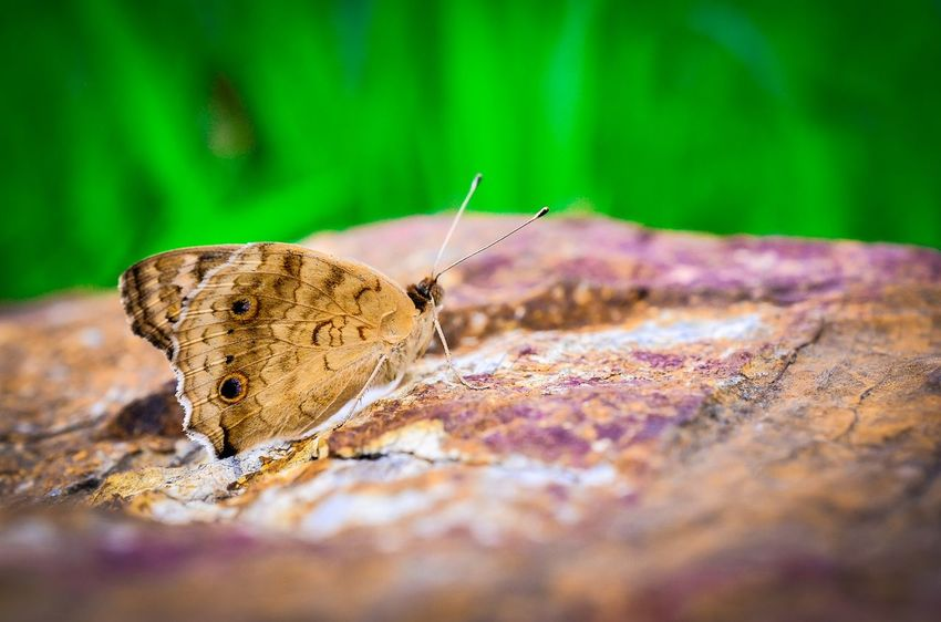 Animal Antenna Animal Themes Animals In The Wild Beauty In Nature Butterfly Close-up Crawling Day Focus On Foreground Fragility Insect Nature No People One Animal Outdoors Selective Focus Surface Level Tranquility Wildlife Zoology