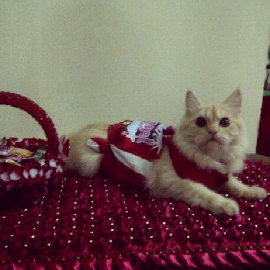 Welcome Chrismast by katty Cat Chrismast Cute Red likeforlike instandroid