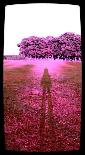 Long Tall Sally Shadow Pink EyeEm