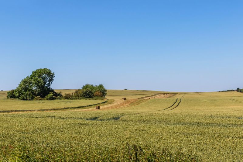 Ridgeway landscape Uk The Ridgeway National Trail Walking Rambling Land Field Landscape Tranquil Scene Agriculture Tranquility Sky Rural Scene Environment Plant Growth Scenics - Nature Beauty In Nature Nature Clear Sky Day Farm Blue No People Copy Space