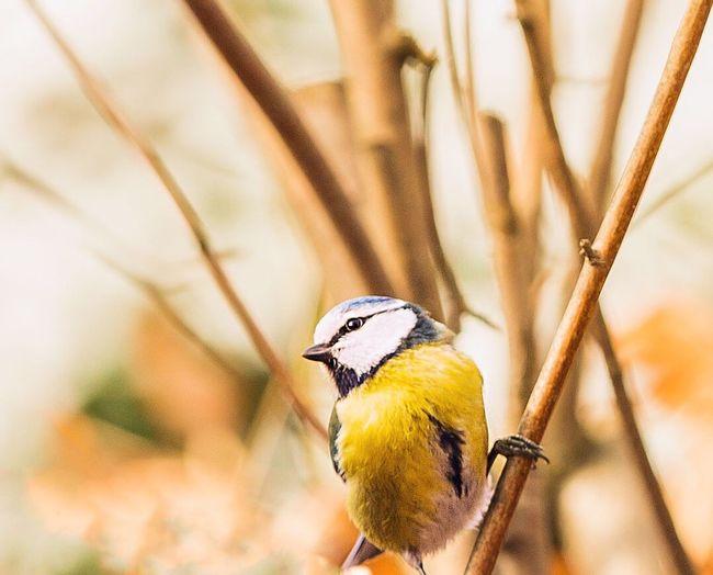 Birdie time.