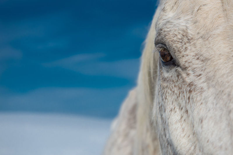 Animal Head  Animal Themes Beauty In Nature Close-up Day Domestic Animals Focus On Foreground Horse Livestock Mammal Nature No People One Animal Outdoors Portrait Sky
