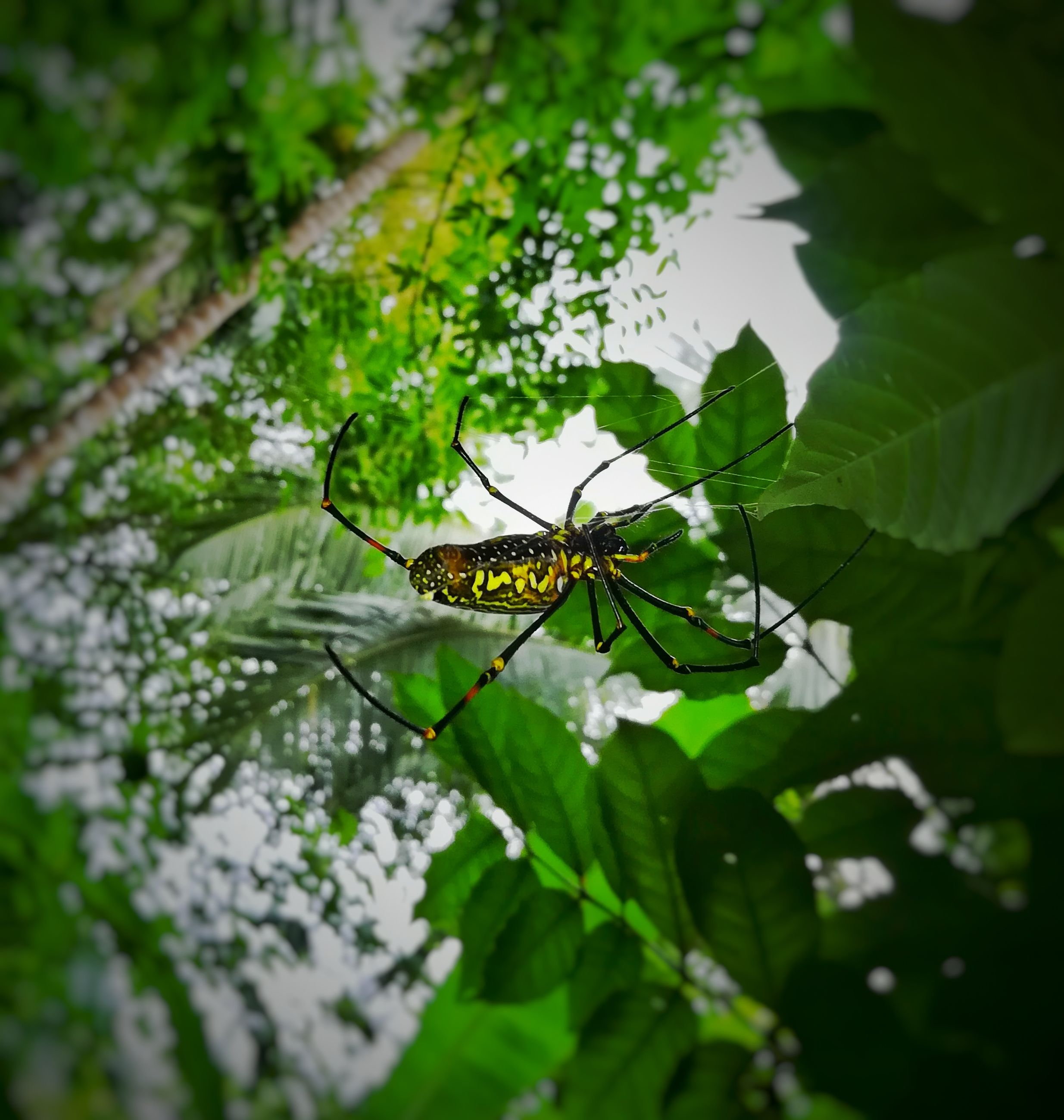 one animal, animal themes, animals in the wild, insect, leaf, green color, animal wildlife, nature, close-up, no people, day, outdoors, plant, beauty in nature