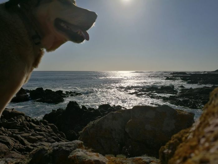 Sea Dog Beach