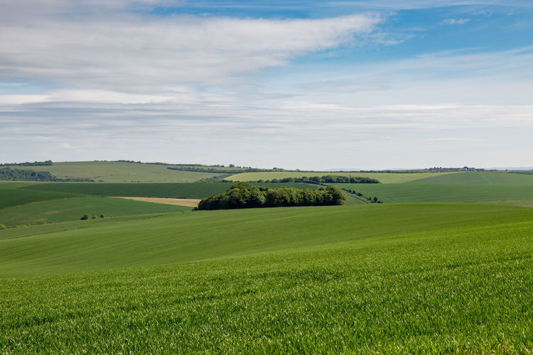 Green Sussex Landscape Agriculture Beauty In Nature Cloud - Sky Countryside Day Field Grass Green Color Growth Landscape National Park Nature No People Outdoors Rural Scene Scenics Sky South Downs Sussex Tranquil Scene Tranquility Tree