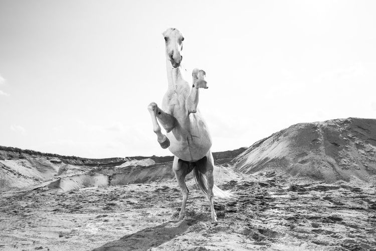 "personal project ""horses"" Animal Dynamic Horse Horse Photography  Horseback Riding Horses Jump Krzysztof Werema Wild"