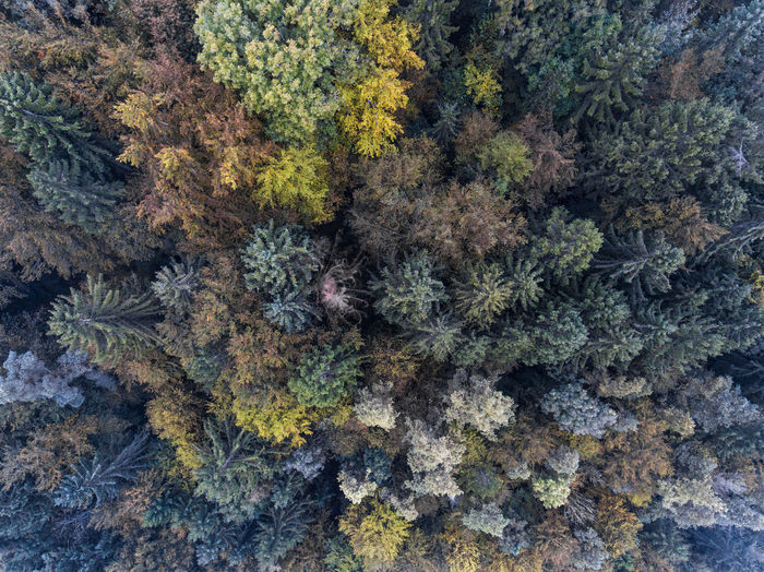 Autumn Forest Aerial Photo Aerial Photography Aerial Shot Aerial View Autumn Backgrounds Beauty In Nature Dji Fall Forest Leaf Nature No People Outdoors Tree