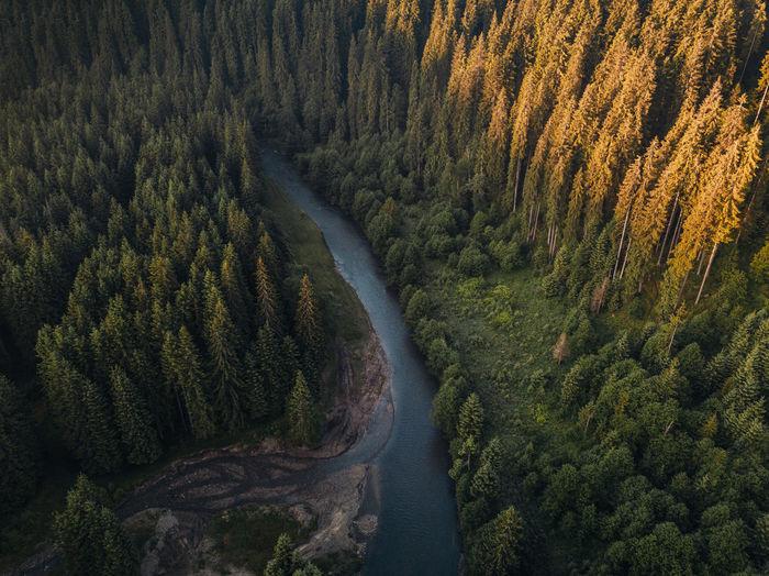 High angle view of pine trees