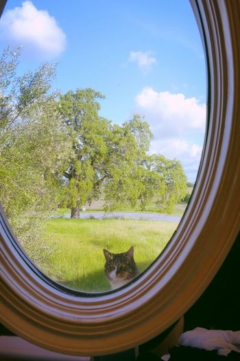 Window Day Sky Cat Cat Looking At You Cats Cats Of EyeEm Cat♡ Cat Watching Cat Looking Through Window