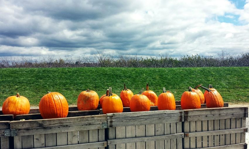 Pumpkins In Wooden Crate On Grassy Field Against Cloudy Sky