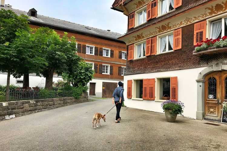 View of a dog walking in front of building