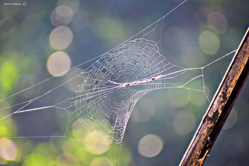 Clicked On Nikon D3300 Spider Web Web Close-up Beauty In Nature