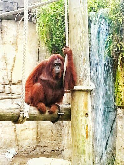 Wildlife Zoo Animals  Enjoying Life No Location Needed