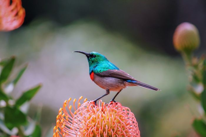 Plant Kirstenbosch Bird South Africa Botanical Gardens Beauty In Nature Birds Flowers Nature Nature_collection Nature Photography Animals In The Wild Flower