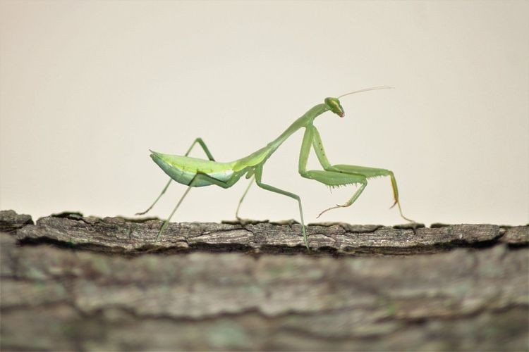 South Africa Insects Animal Themes Animal Wildlife Animals In The Wild Close-up Green Color Insect Nature One Animal Outdoors Praying Mantis Praying Mantis On The Go