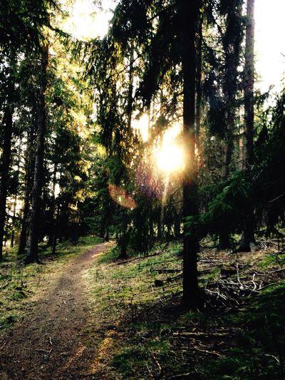 WhereIcomefrom Östersund nature magic