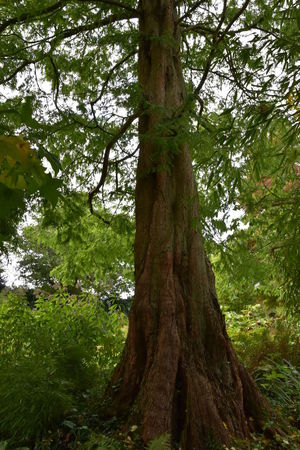 Beauty In Nature Beth Chato Gardens Day Elmstead Market Essex Green Color Growth Horizontal Landscape Nature No People Outdoors Sky Social Issues Tree Tree Trunk