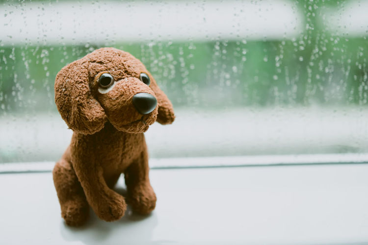 Puppy Stuffed Toy With Big Eyes On Sad Rainy Day Animal Animal Themes Big Eyes Close-up Dog Doll Indoors  Lonely Looking No People Puppy Rain Drops Raining Rainy Day Sad Stuffed Toy Toy Animal Window