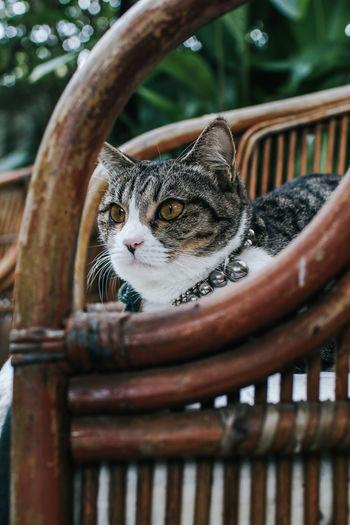 Portrait of cat seen through metal railing