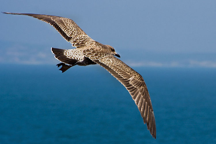 Close-up of falcon flying against sky