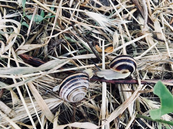 Snails🐌 Day No People Close-up Nature Plant Field Leaf Full Frame Outdoors Plant Part Backgrounds High Angle View Communication Text Grass Growth Land Abundance Large Group Of Objects Metal