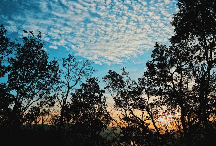 Tree Beauty In Nature Silhouette Tranquility Tranquil Scene Cloud - Sky Scenics - Nature Nature_collection Nature Photography Naturelovers Dawn Dawn Collection