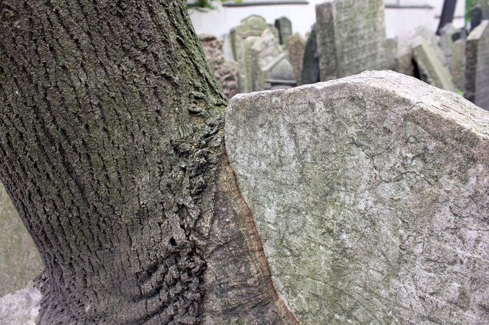 tree growing into tombstone Old Jewish Quarter Close-up Day Focus On Foreground Nature No People Old Jewish Cemetery Outdoors Rough Textured  Tombstone Tree Tree Trunk