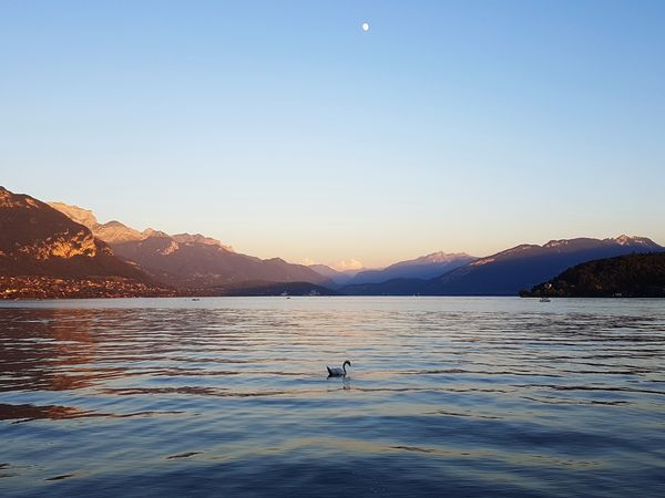 Animal Wildlife Lake View End Of Day Swan White Swan Alone In The Lake Beauty In Nature Quiet Moment One Star Mountain Sunset Landscape Lake Enjoying The View Lake And Mountains Lake And Mountain And Sky First Star Lost In The Landscape An Eye For Travel